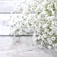 【かすみ草の花言葉】ベイビーブレイスと呼ばれる花を徹底解説!