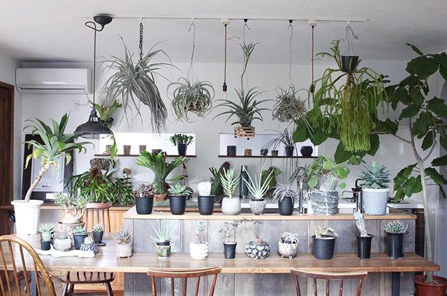 植物がたくさんあるインテリア9