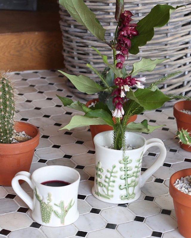 マグカップで楽しむ観葉植物