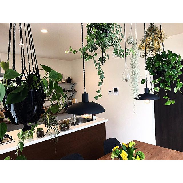 植物がたくさんあるインテリア