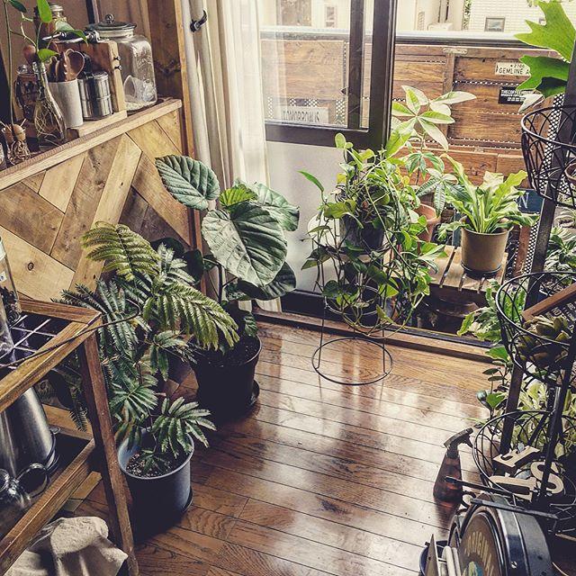 植物がたくさんあるインテリア4