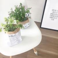 春の訪れとともにはじめる植物のある暮らし♪春を植物と共に楽しもう!