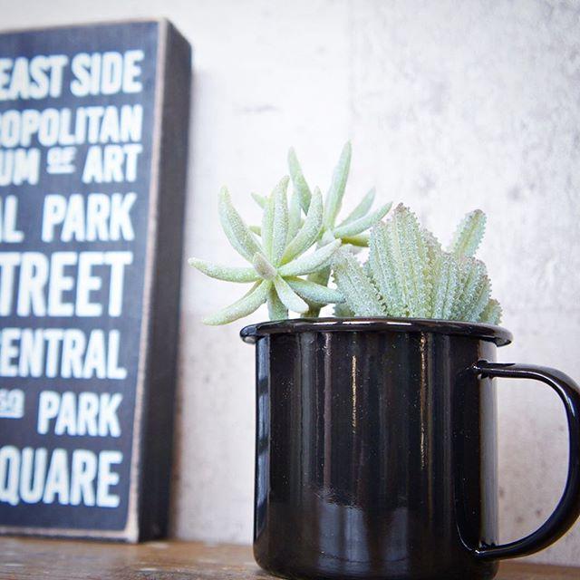 マグカップで楽しむ観葉植物3