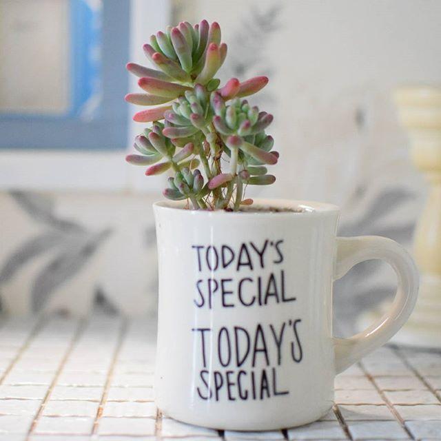 マグカップで楽しむ観葉植物4