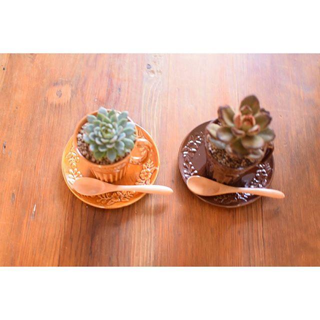 マグカップで楽しむ観葉植物2