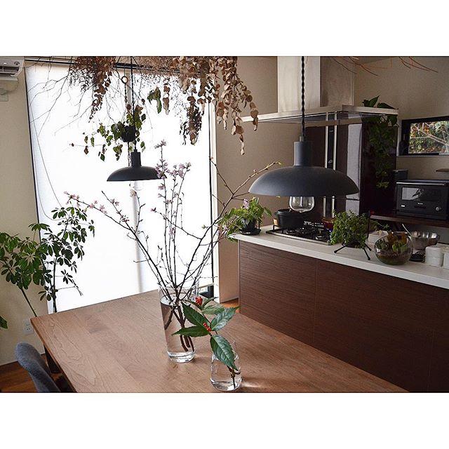 桜 テーブルコーディネート