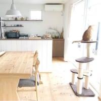 インテリアを整えて快適な空間に!「ペットと暮らす素敵なお部屋」を紹介♡