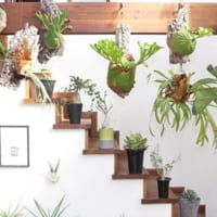 まるで森みたい!グリーンをたくさん飾って自然豊かなお部屋を作ろう♪