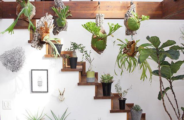 植物がたくさんあるインテリア6