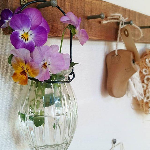 観葉植物 春 ハンギングディスプレイ