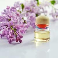 【ライラックの花言葉】甘い香りの華やかな花の色別の意味を解説!