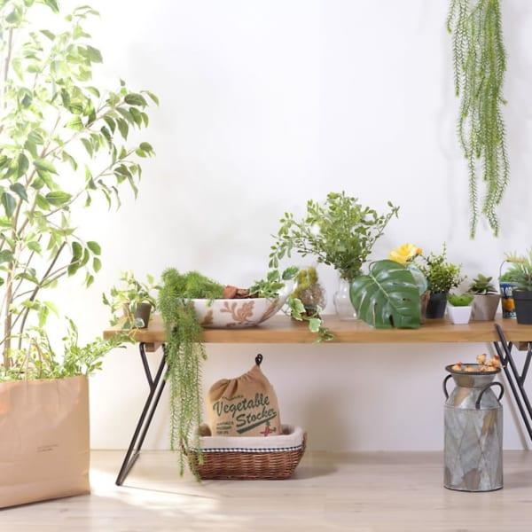 植物に囲まれる