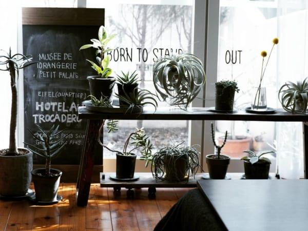 窓・窓際インテリア 観葉植物3