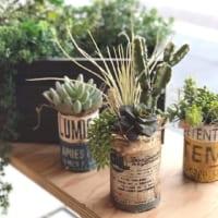 いつものお部屋を魅力的に見せる♪オシャレな観葉植物の飾り方をご紹介