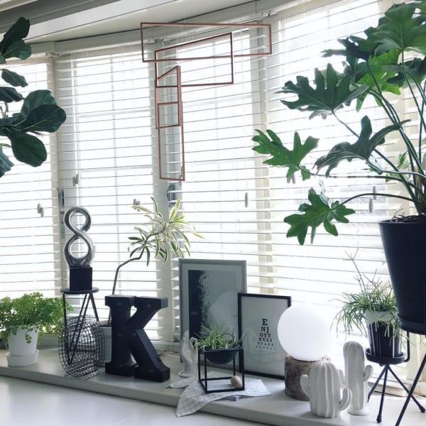 窓・窓際インテリア 観葉植物4