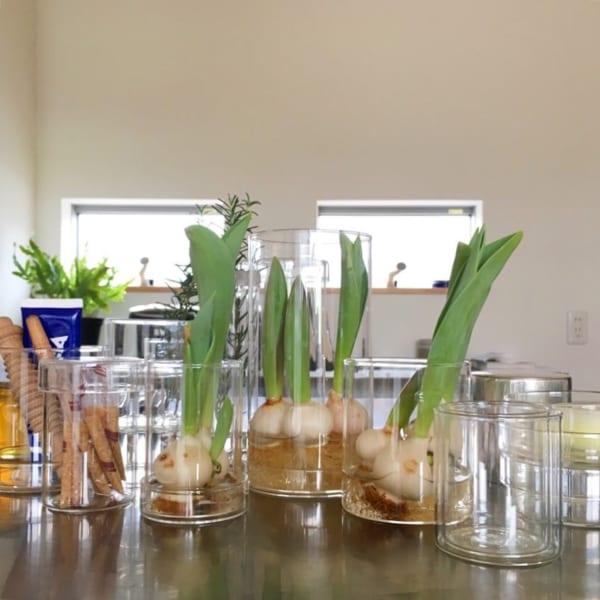 ガラスインテリア 無印良品 水耕栽培
