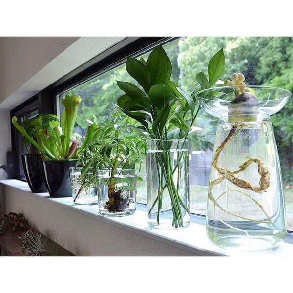 ♪オシャレな観葉植物の飾り方8