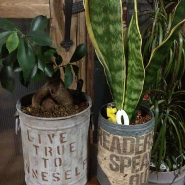 オシャレな観葉植物の飾り方11