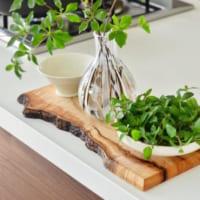 キッチン菜園はじめませんか?お手軽な水栽培で育てる食べられるグリーン