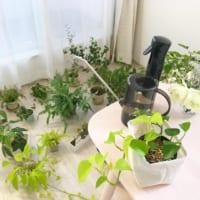 植物栽培・お掃除・加湿器にも◎インテリアに馴染むおしゃれなジョウロ特集♪