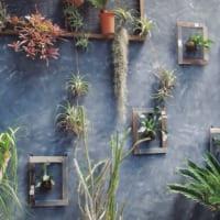 植物をたっぷり取り入れて♪春夏は涼しげな「ボタニカルインテリア」で決まり!