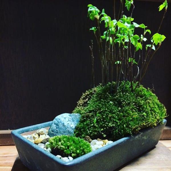 屋外にも盆栽を置く2