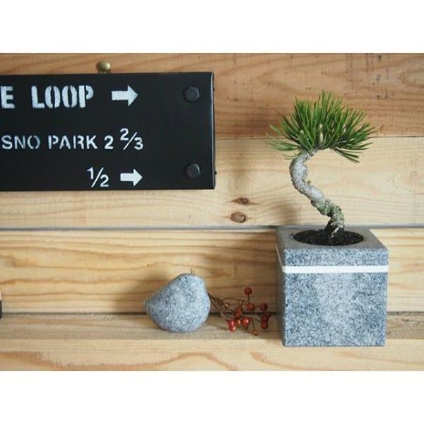 小さな盆栽で楽しむ空間2
