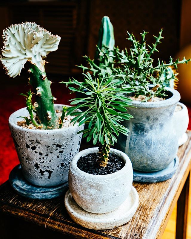 バイオフィリア 植物2