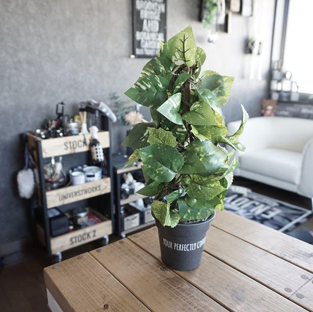 ダイソー フェイクグリーン キャンドゥ 植木鉢