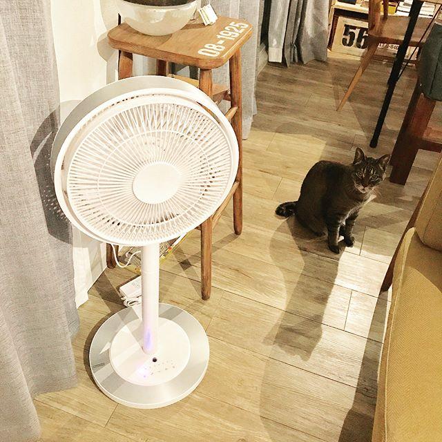 カモメファン 扇風機