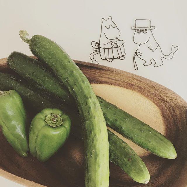 ガーデニング 初心者 おすすめの野菜3