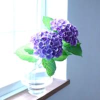 紫陽花の魅力と共に過ごす♪しとしと梅雨も心穏やかに乗り切ろう!