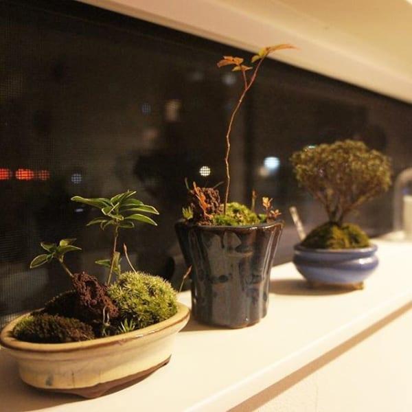 小さな盆栽で楽しむ空間3