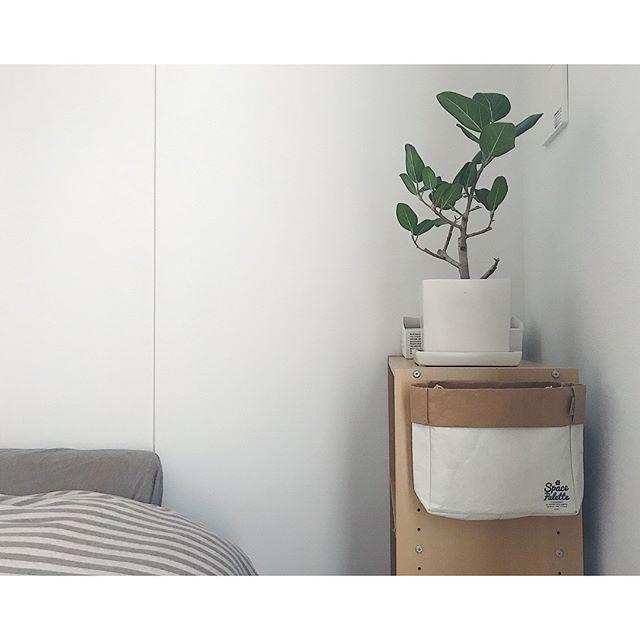 寝室インテリア グリーン