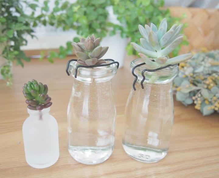 透明感のあるガラス瓶と多肉植物