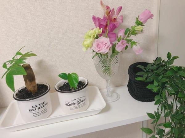 フラワーベース 100均 観葉植物