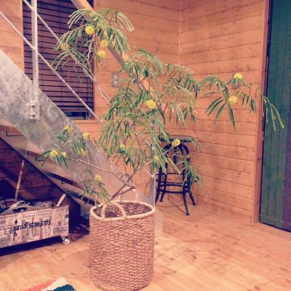 繊細でナチュラルなスタイルが人気の観葉植物3