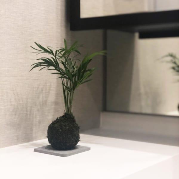 テーブルヤシ【ダイソー】