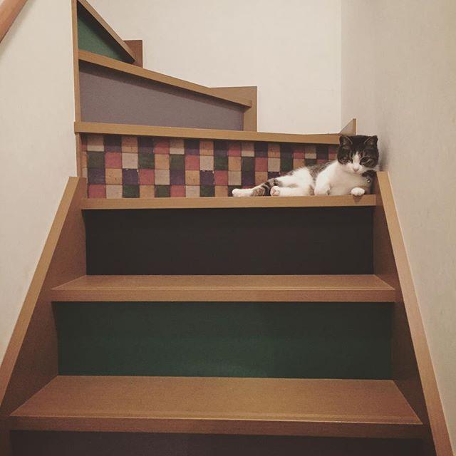 階段 DIY10