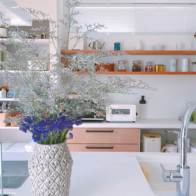 南のキッチンにおすすめアイテム②観葉植物 風水