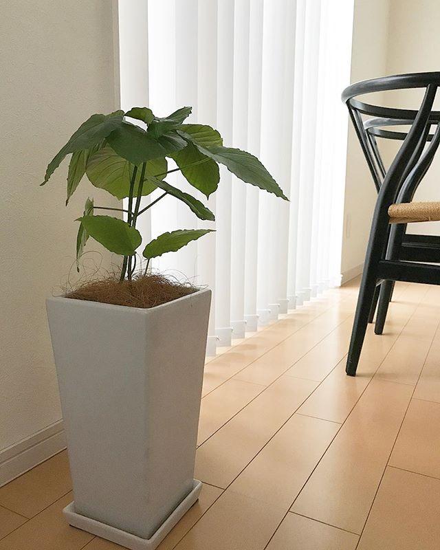 観葉植物の風水的効果2