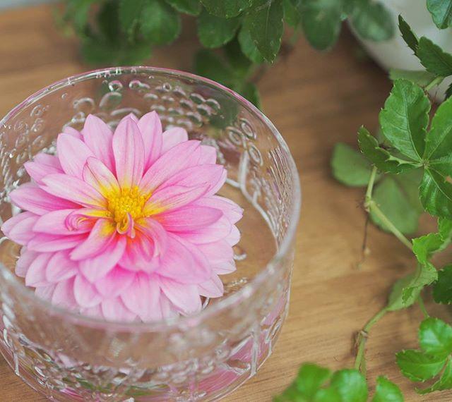 浮き花を一輪で楽しむ