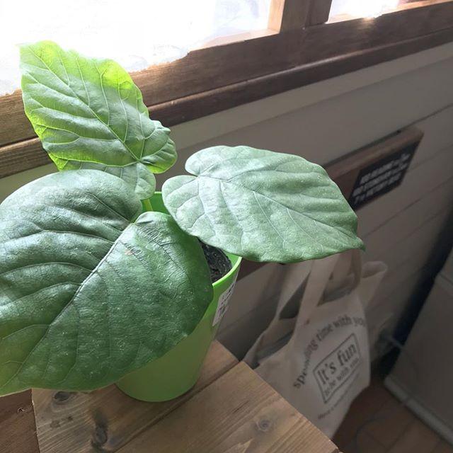 観葉植物の風水的効果