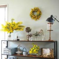 ふわふわの花が可愛らしく色もきれい!鮮やかなミモザのリースをディスプレイ