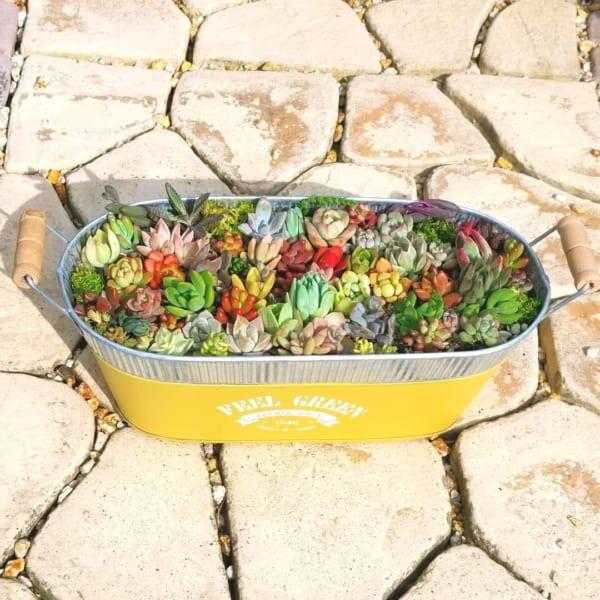 3COINSのブリキ缶に寄せ植え