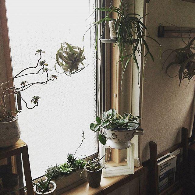 植物をちりばめたグリーンカラーのある空間2