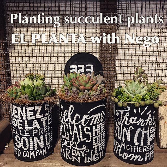 多肉植物を飾ろう13