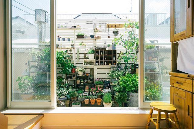 植物で楽しむベランダガーデニング2