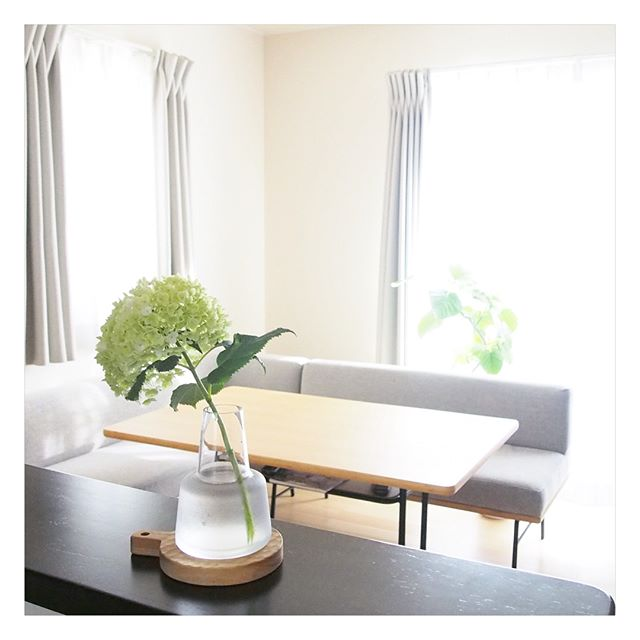 南のキッチンにおすすめアイテム②観葉植物 風水2
