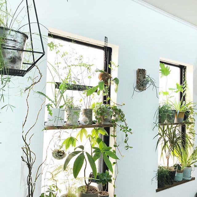 たっぷりの植物で楽しむインテリア